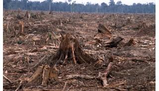 ¿Sabe el verdadero origen de la madera de sus obras?